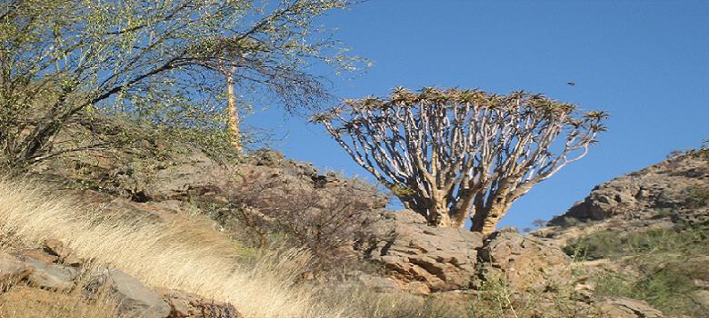 Bild vom Namib-Naukluft-Park