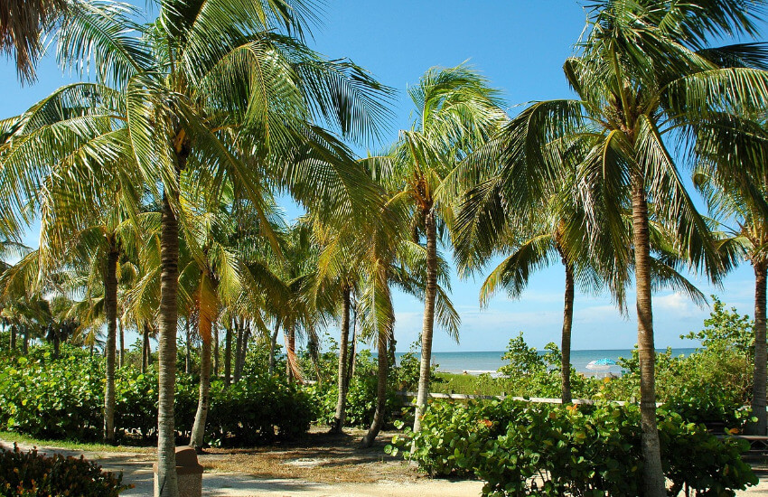 Palmenwald unter blauem Himmel
