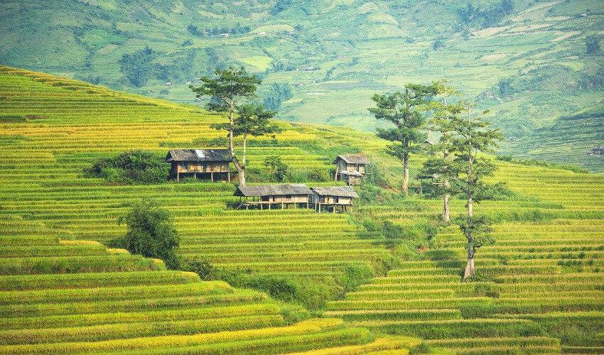 Ein vietnamesisches Landschaftsbild