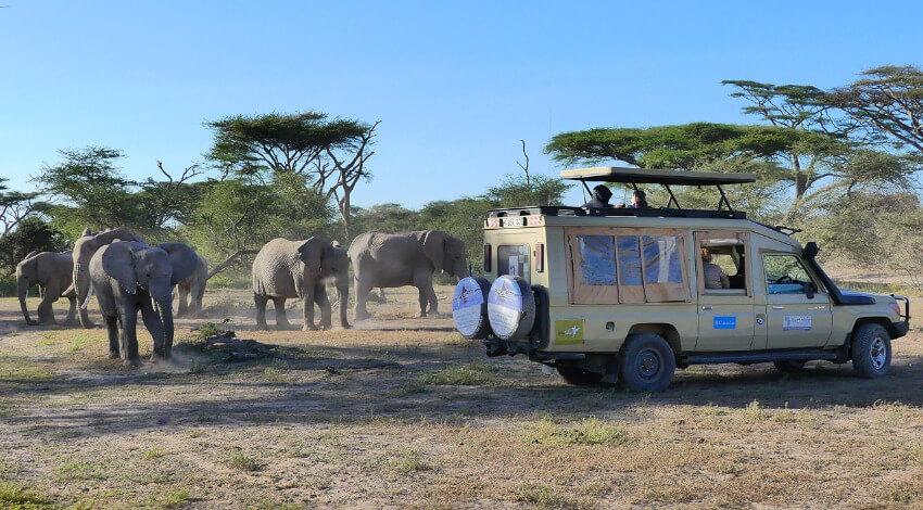 Ein Safari-Jeep mit Touristen ganz nahe an einer Elefantenherde.